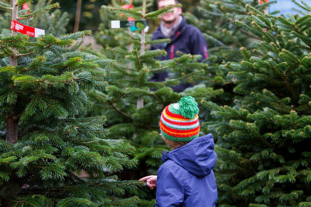 penzance christmas trees