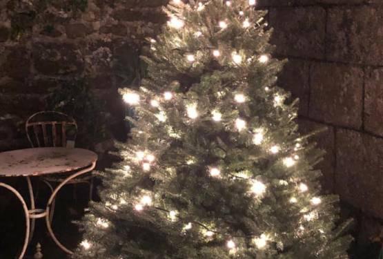 Cornwall Christmas Trees