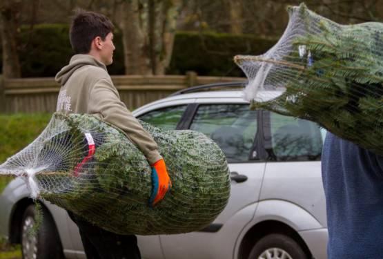 Christmas trees Cornwall 2019