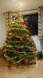 best christmas trees cornwall